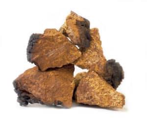 Chaga Pilz kaufen Inonotus obliquus